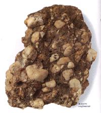الصخور الرسوبية Sedimentary Rock conglomerate.jpg